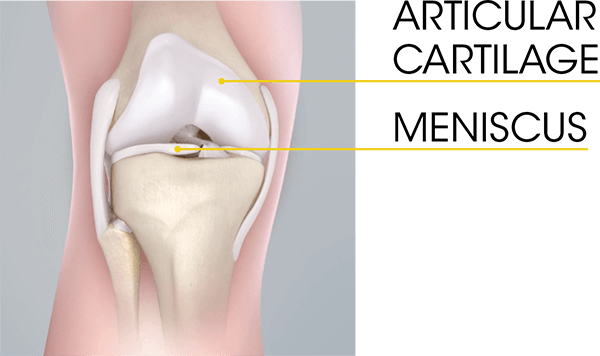 Understanding The Role Of Cartilage In The Knee